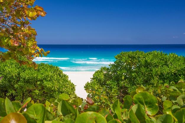 Красивый пляж плайя дельфинес на карибах, с белым песком, в окружении зеленых деревьев