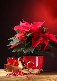 植木鉢の美しいポインセチアと赤い背景の木製テーブルの上の贈り物
