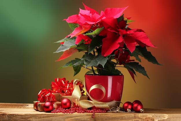 植木鉢、ギフト、明るい背景の木製テーブルの上のクリスマスボールの美しいポインセチア