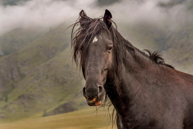 Beautiful portrait of a brown horse with multicolored lips and shaggy hair background clouds