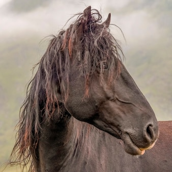 Beautiful portrait of a brown horse with shaggy hair âin the background clouds and a mountainside