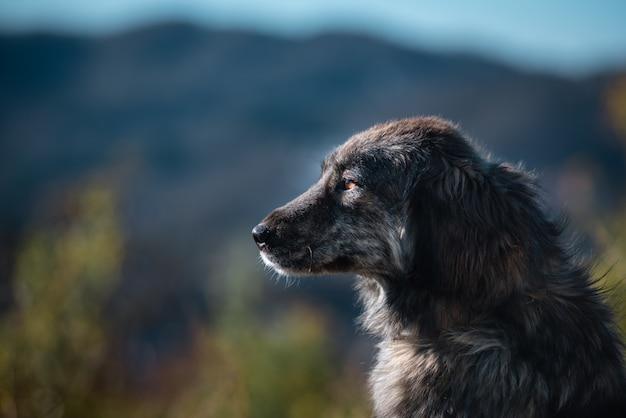 Красивый портрет простой собаки в природе