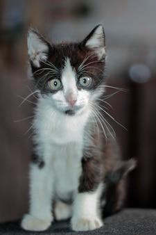 국내 고양이 (고양이 속 silvestris catus) 서 포즈의 아름 다운 초상화