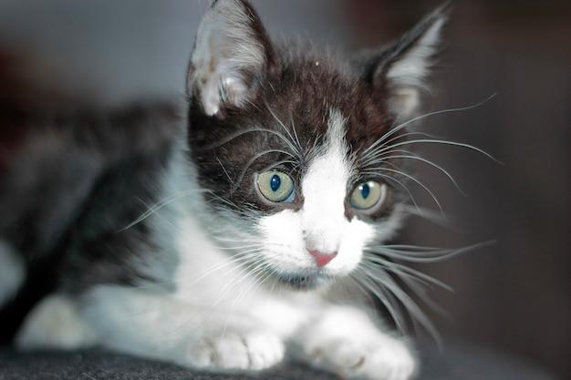 작은 고양이 (고양이 속 silvestris catus)의 아름다운 초상화