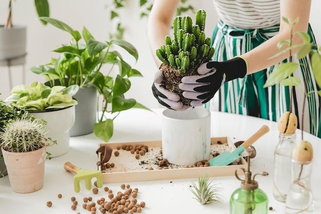 Красивый процесс домашнего садоводства молодая женщина-садовник ухаживает за зелеными растениями в стильных мраморных керамических горшках на белом деревянном столе. растения любят весну. стильный интерьер с растениями.