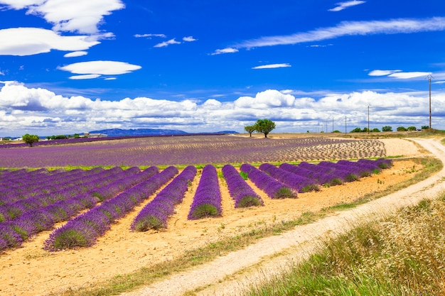 Beautiful provence with blooming lavender fields. france, va.ensole,