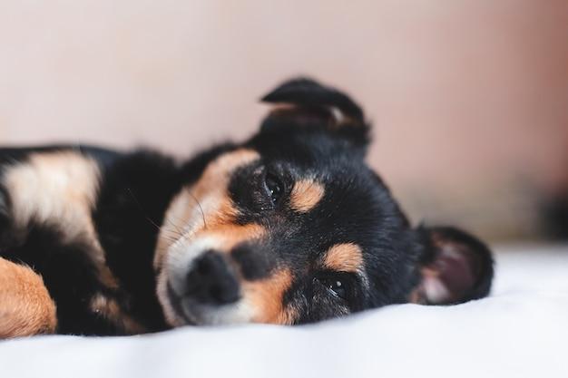 Beautiful puppy sleeping