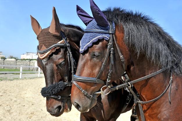 農場で美しい純血種の馬