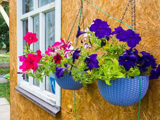 Красивые фиолетовые и розовые цветы в горшках, висящие снаружи