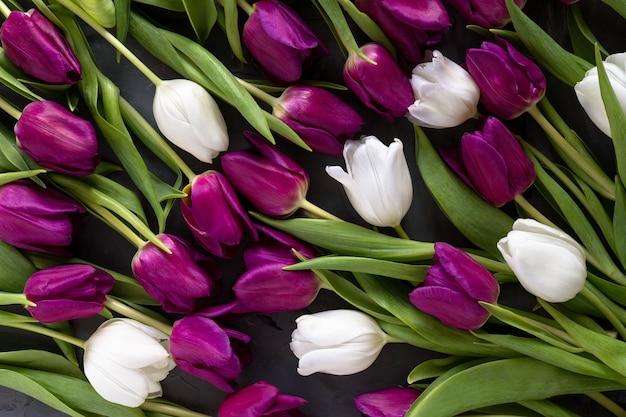 Фон красивые фиолетовые и белые тюльпаны.