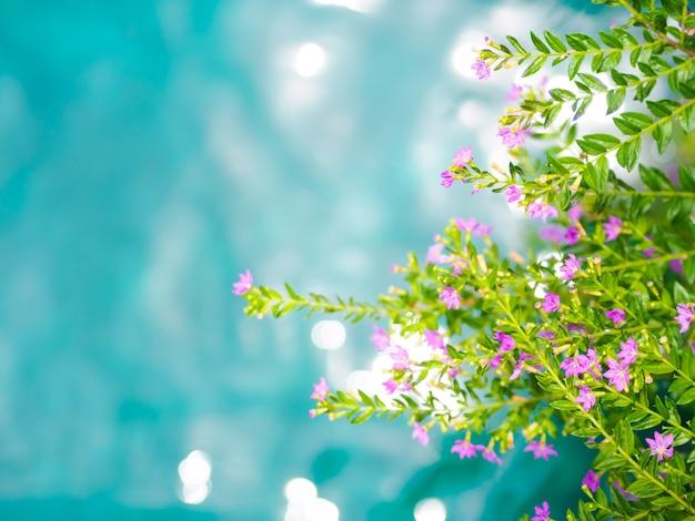 青と緑の水の背景と美しい紫のかわいいヒエシピホリア花。