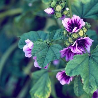 Beautiful purple flowers in garden