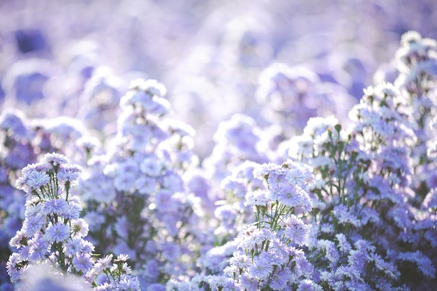 Bellissimi fiori viola in natura