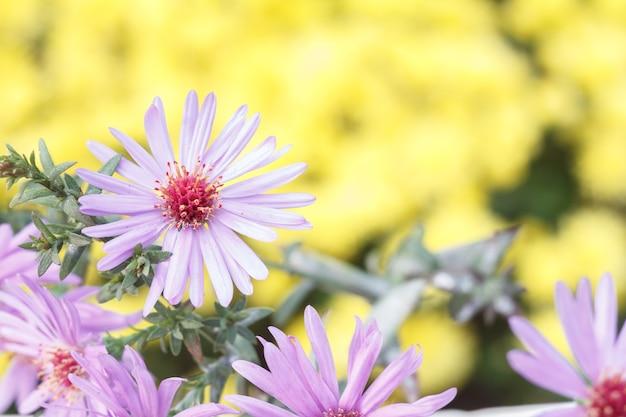 자연 노란색 배경에서 햇빛 아래 아름다운 보라색 꽃. 클로즈업 보기입니다.