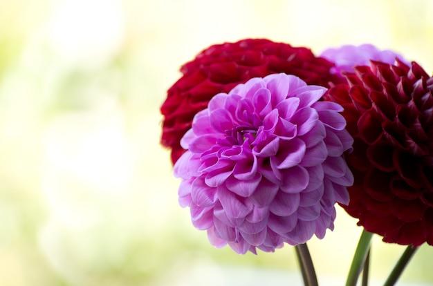 美しい紫色の花