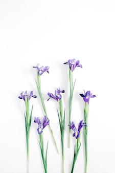 Красивые фиолетовые цветы ириса на белом