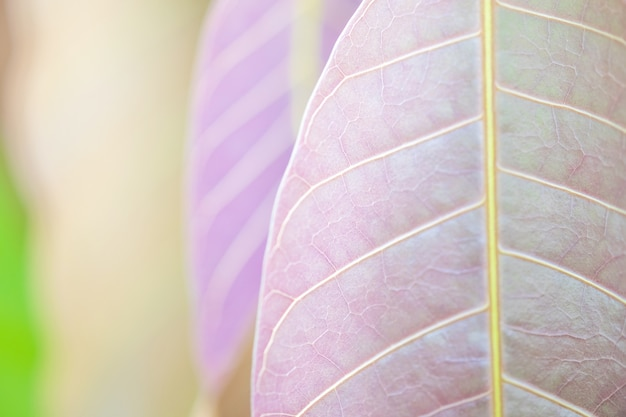 Beautiful purple leaves and sunligth in the garden at summer time. Premium Photo