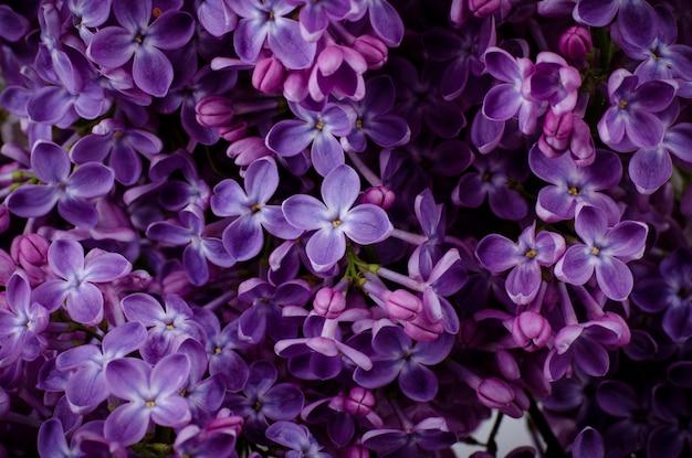 Красивые фиолетовые сиреневые цветы.