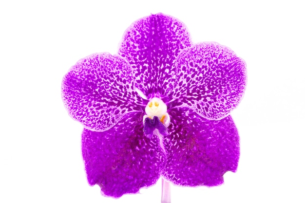 Beautiful purple orchid flower with water drop isolated on white background