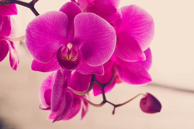 Beautiful purple  orchid flowers on a branch hanging in the air