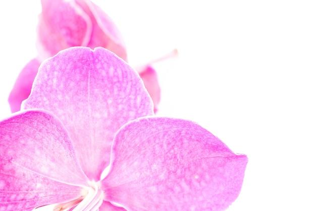 흰색 바탕에 아름 다운 보라색 난초 꽃입니다. 부드럽고 흐릿한 초점.