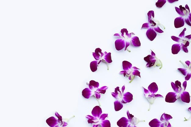 흰색 바탕에 아름 다운 보라색 난초 꽃입니다.