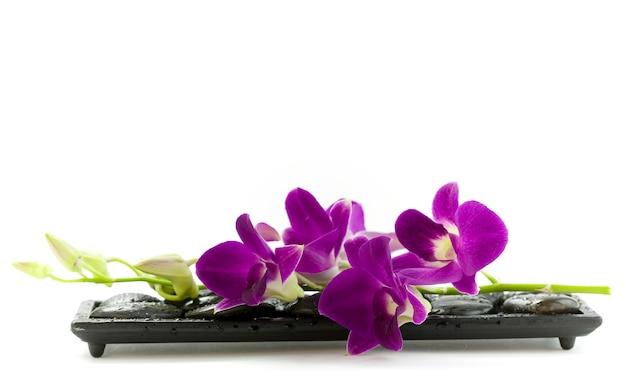 Красивые фиолетовые орхидеи
