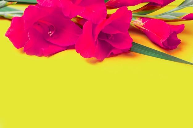 Красивые фиолетовые розовые гладиолусы на желтом цветном бумажном фоне поздравительной открытки