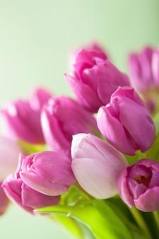美しい紫色のチューリップの花