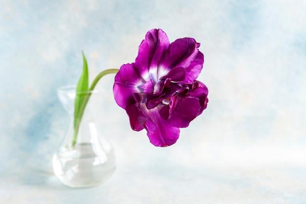 ガラスの花瓶に美しい紫色のチューリップ。