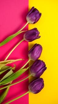 Красивые фиолетовые тюльпаны на вертикальном розово-желтом фоне