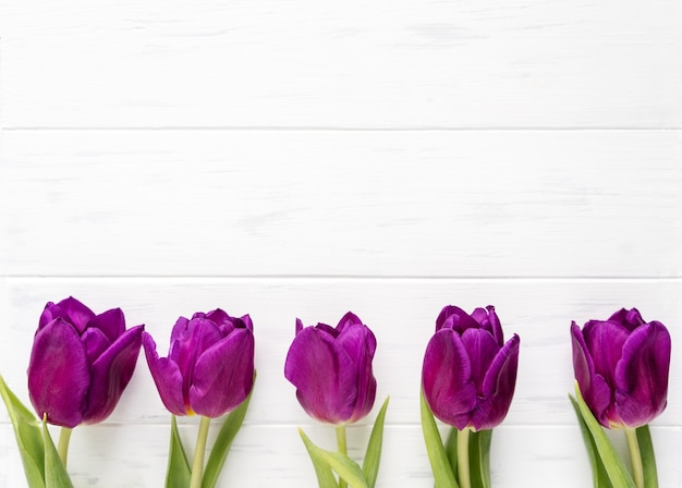 Красивые фиолетовые тюльпаны на белом фоне. весенние цветы тюльпаны фон с копией пространства