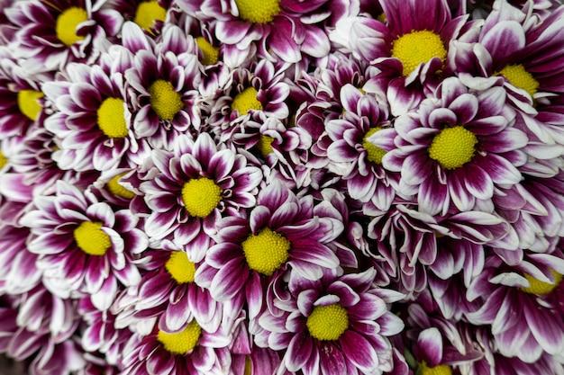 Beautiful purple-yellow flower cluster