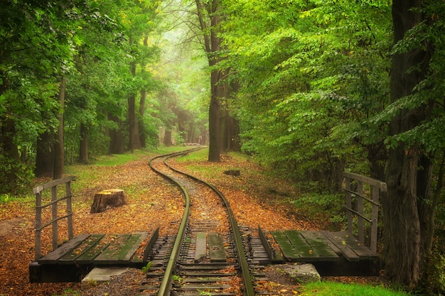 Beautiful railway track in autumn in a city park