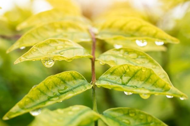 Beautiful rain drops on the leaves