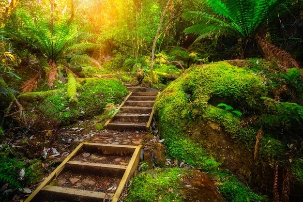 オーストラリア、タスマニア州の美しい熱帯雨林のジャングル