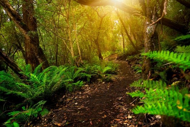 태즈 메이 니아, 호주의 아름다운 열대 우림 정글 프리미엄 사진