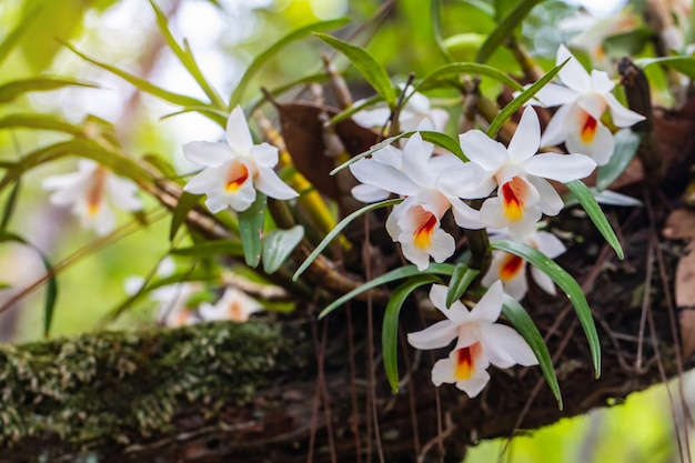 Beautiful rare wild orchids in tropical forest of thailand
