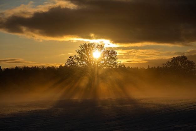 Beautiful rays through the frosty morning oak-trees,winter sunrise view at krimulda, latvia