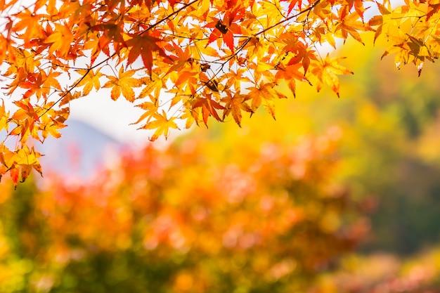 나무에 아름 다운 빨강과 녹색 단풍 잎