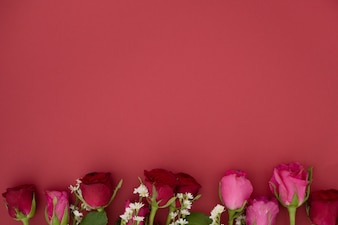 Beautiful Red and Pink Roses flowers on red background with space