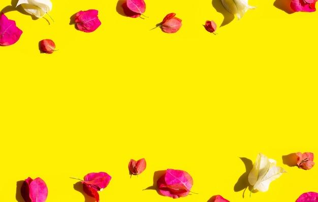 黄色の背景に美しい赤と白のブーゲンビリアの花。夏の背景コンセプト