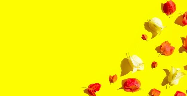黄色の背景に美しい赤と白のブーゲンビリアの花。上面図