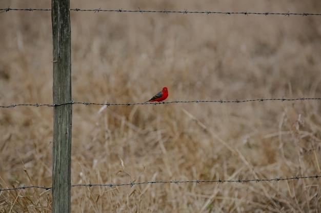농장 울타리에 있는 아름다운 붉은 새 자연의 아름다운 풍경