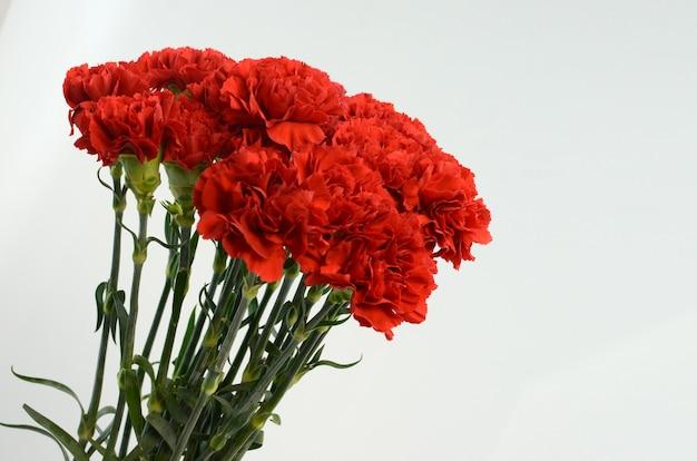 아름 다운 붉은 카네이션 꽃 흰색 배경에 고립