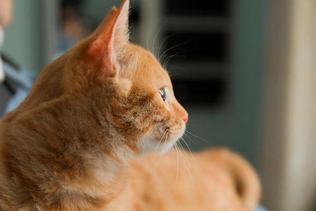白い毛布の上の美しい赤い猫