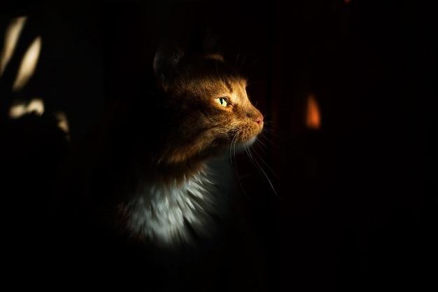 Beautiful red cat