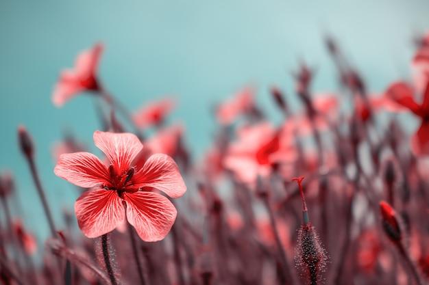 Красивые красные цветы в весенней природе, мягкий фокус. волшебный красочный художественный образ нежности природы, весенние цветочные обои