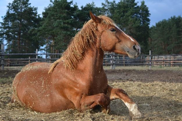 夕日の光を浴びる美しい赤い馬