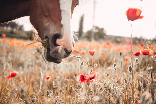 스프링 필드에 긴 검은 갈기와 아름 다운 붉은 말